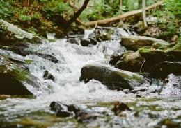森林小溪山间流水图片(12张)