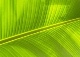 翠绿的叶子图片(9张)