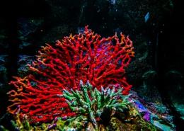 泰国曼谷海底世界图片(9张)