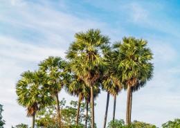热带椰树图片(12张)