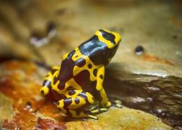 色彩鲜艳的青蛙图片(11张)