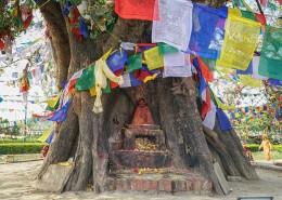尼泊尔蓝毗尼释迦摩尼诞生地菩提树风景图片(11张)