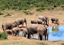 聚在一起的象群图片(14张)