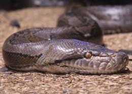 冰冷危险的毒蛇图片(16张)
