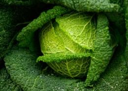 绿色健康的卷心菜图片(16张)
