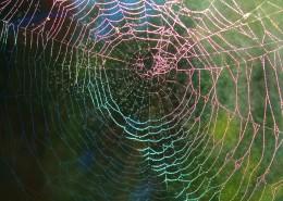 蜘蛛网高清图片(12张)