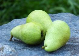 清甜多汁的梨图片(15张)