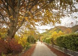 新西兰箭镇秋色无边风景图片(8张)