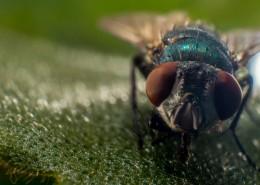 苍蝇微距摄影图片(15张)