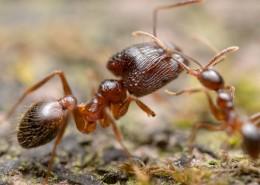 微距蚂蚁图片(10张)