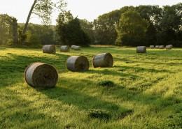 夏日田园里的草垛自然风光图片(10张)