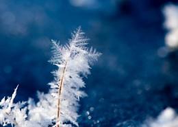 冬季冰雪图片(16张)