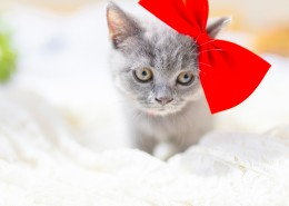 可爱灰色小猫图片(10张)