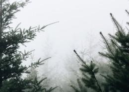 雾天的森林图片(11张)
