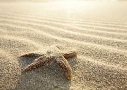 沙滩上的海星图片(14张)