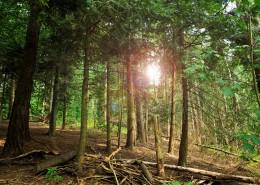 茂密的森林图片(16张)