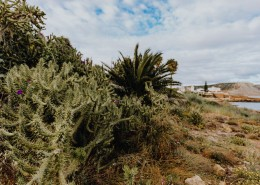 来自葡萄牙的植物图片(12张)