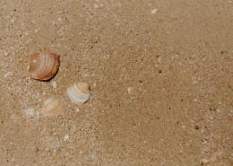 沙滩贝壳和小石子的图片(10张)