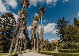 葡萄牙热带植物园的图片(10张)