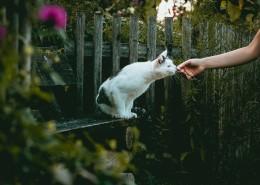 乖巧可爱的猫咪图片(19张)