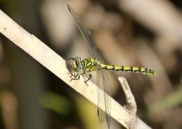 轻盈停落的蜻蜓图片(16