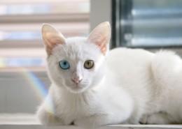 可爱白色小猫图片(14张)