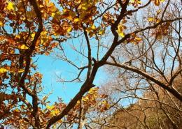 唯美的秋叶风景图片(9张)