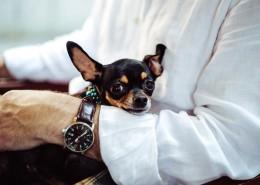 呆萌的宠物狗的图片(21张)