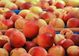 新鲜好吃的桃子图片(11张)