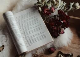 翻开的书籍的图片(10张)