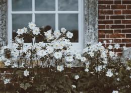 花园里的小花图片(14张)