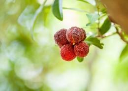 红色甘甜的慈溪杨梅图片