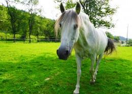 一匹英俊的白马图片(10张)