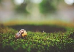 行动缓慢的蜗牛图片(10张)