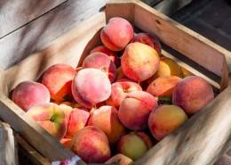 新鲜的桃子图片(12张)