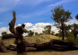 新疆罗布人村寨自然风景