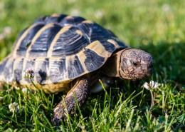 缓慢爬行的乌龟图片(15张)