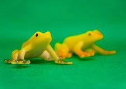 迷你青蛙玩具图片(11张)