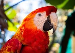 猩红金刚鹦鹉图片(10张)