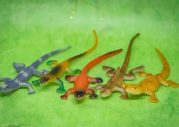 蜥蜴模型图片(9张)
