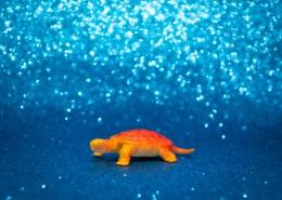 迷你乌龟玩具图片(11张)