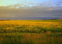 宁静的田野图片(11张)