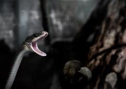令人毛骨悚然的蛇图片(11张)