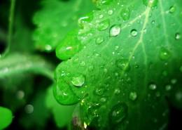 绿叶上的水珠图片(13张)