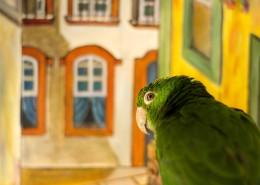 绿色的鹦鹉图片(11张)
