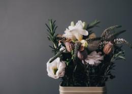精致的小盆栽图片(11张)