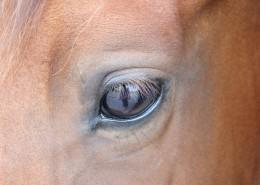 马的眼睛特写图片(14张)