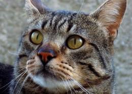 睁大双眼的小猫图片(12张)