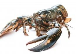 外壳坚硬的龙虾图片(9张