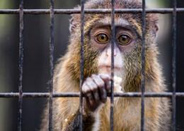笼子里的猴子图片(10张)